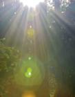 阳光透过树叶间的缝隙 阳光透过树叶的图片