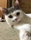 齐刘海猫图片 齐刘海猫搞笑 网友:简直萌化了