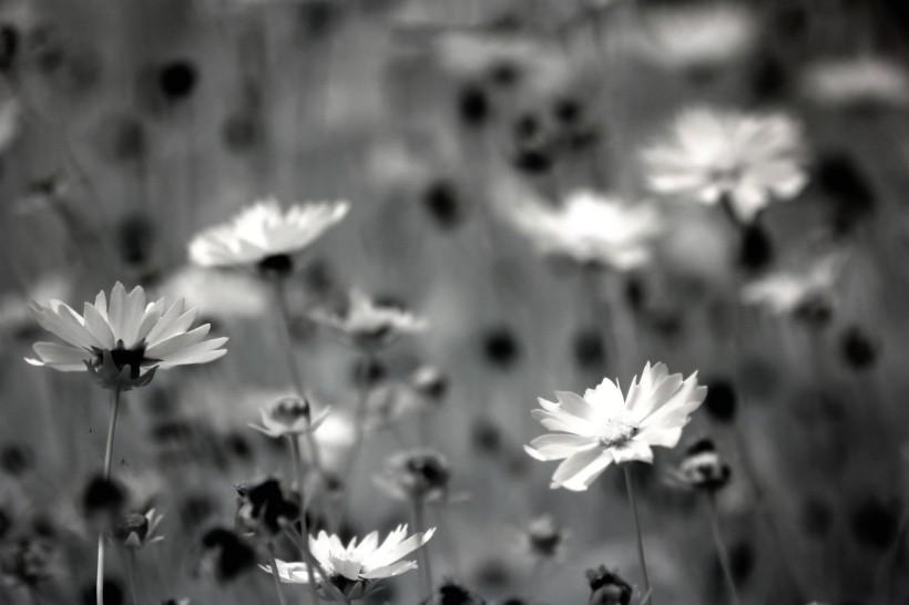 高清黑白风景图 黑白风景图片大全
