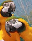 鹦鹉照片 鹦鹉照片大全 鹦鹉是国家保护动物吗