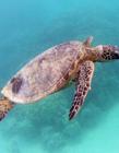 海龟是什么动物 海龟是国家几级保护动物 海龟是几类保护动物