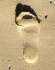沙滩上的一串脚印像什么 沙滩上的脚印图片