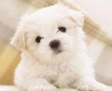 可爱动物图片微信头像