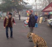 大爷老虎宠物幽默搞笑图片