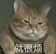 烦心情可爱宠物表情包图