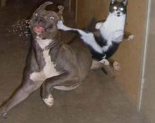 猫狗动物打架搞笑图片