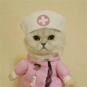 猫可爱动物cos情侣头像表情包图
