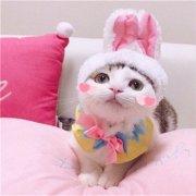 猫可爱卖萌动物表情包头像图