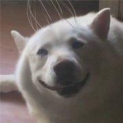 狗动物可爱搞笑微信头像表情包图