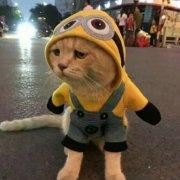 萌宠猫动物可爱微信头像图片大全