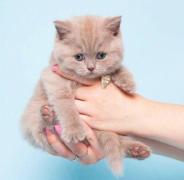 小奶猫萌宠可爱表情包图片大全