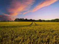 收割稻田图片植物高清图片