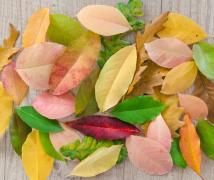 五颜六色的树叶简约背景高清图片