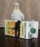 鸟穿丝袜主人恶搞动物图片
