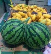 奇异个性连体西瓜水果植物图片