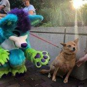 人形玩偶吓坏狗动物搞笑图片