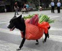 狗买菜动物驮东西搞笑图片