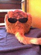 猫戴墨镜动物恶搞图片