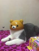 猫动物戴头套恶搞图片