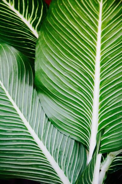 绿色的棕榈叶图片