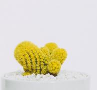 彩色的仙人掌盆栽图片