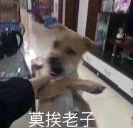可爱的狗狗表情包