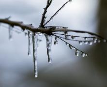 树枝结冰的图片
