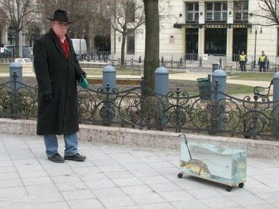 遛金鱼的搞笑图片