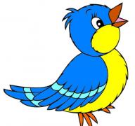彩色的鸟简笔画